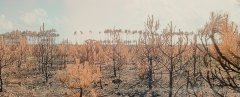 Marko Zink, I never promised you anything_4338_15, from the series In the forest:tragedies, 2021, analogue panorama photography, matt Diasec, mounted, 73 x 180 cm, Edition 3 + 2AP
