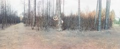 Marko Zink, I never promised you anything_4788_03, from the series In the forest:tragedies, 2021, analoge panorama photograph, matt Diasec, mounted, 73 x 180 cm, edition 3 + 2AP