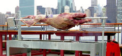 The Lamb, NYC, 2013, Video, HD, Video paal, 6 min, Sound: Nelson Mandela Edition: 5 + 2AP
