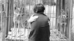 Wolf love, performance video documentation, HD, Video paal, BW, sound, 1:06 min, 2013, 5 + 2AP
