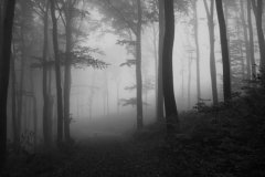 from: These Foggy Days, digital photography