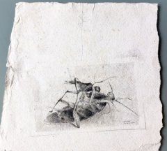 metamorphosis, 2014, pencil on paper, 21,5 x 23 cm